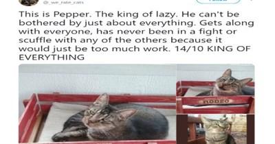 cat rates funny cats tweets cat photos Cats - 8429829