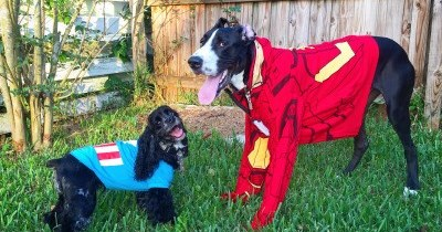 cute dogs superheroes Captain America: Civil Woof