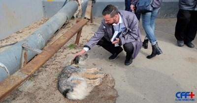 stray dogs stray pets chernobyl animal rescue - 8587781