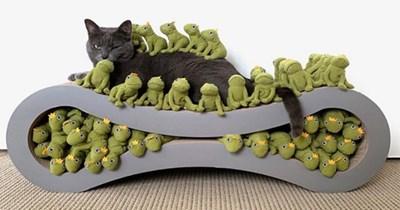 mochi instagram cat frog
