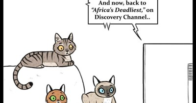 comic cats funny lion