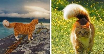 primus cat instagram
