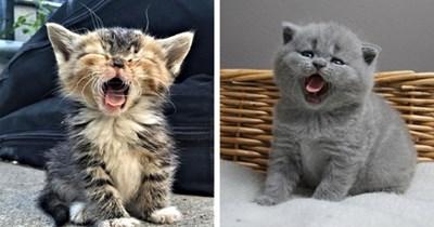 yawning cats cute aww