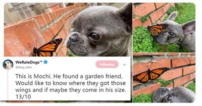dogs butterflies cute aww tweets