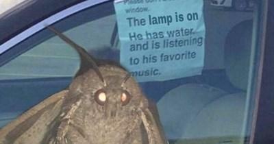 moth meme