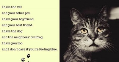 poets funny cats Cats poetry animals - 9050629