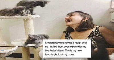 cats aww wholesome cute animals