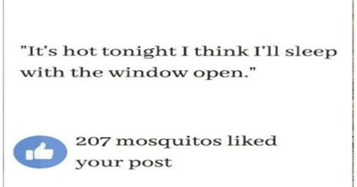 mosquito funny memes animal memes funny animals - 9070085