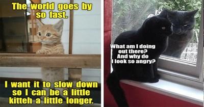 lolcats cat funny memes animals