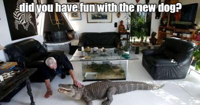Golfy-Wolfy Is Hardy-Wardy! - Animal Comedy - Animal Comedy