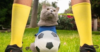 world cup funny cats soccer Cats funny Video - 92300801