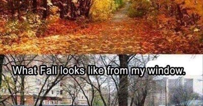 "Text that reads, ""What fall looks like on the internet"" above a pic of a park with colorful leaves everywhere, above a pic of a muddy, gross-looking street and text that reads, ""What fall looks like from my window"""