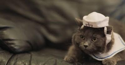 nudist funny video nude cat videos Cats Video - 93139713