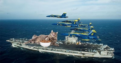 military photoshop funny cats Cats animals - 9315077