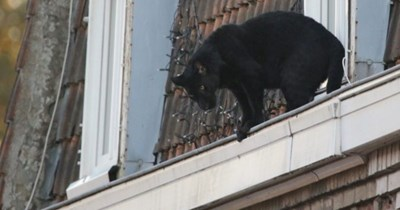 black panther france rooftops