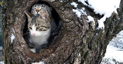 tips feral cats winter Cats - 9476613