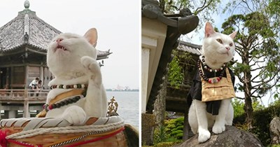 cats shrine japan monks