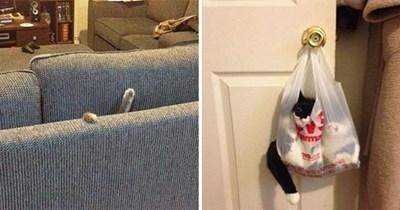 instant regret cats funny
