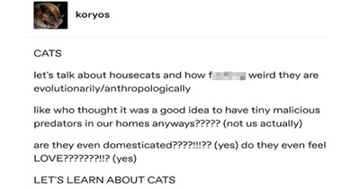 cats tumblr facts domesticated