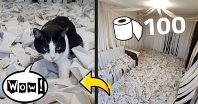 toilet paper Cats Video - 96781569
