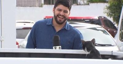 live news TV funny cats cat videos Cats - 9700357