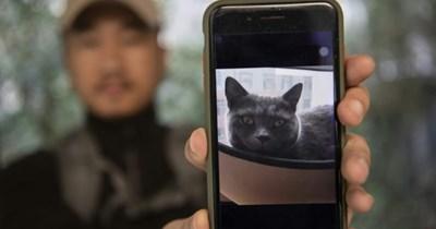 pet detective animals hero