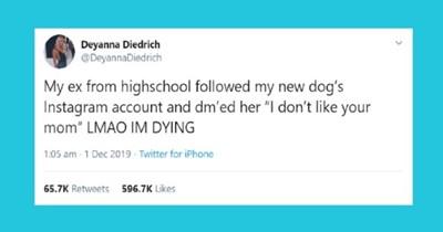 funny tweets animal tweets funny animals animals - 9908485