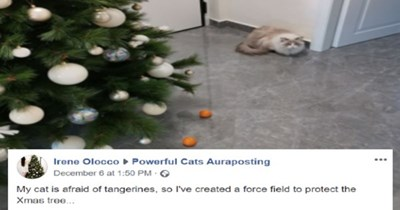 keeping the cat away from the christmas tree   Christmas tree - ► Powerful Cats Auraposting Irene Olocco December 6 at 1:50 PM · My cat is afraid of tangerines, so l've created a force field to protect the Xmas tree...