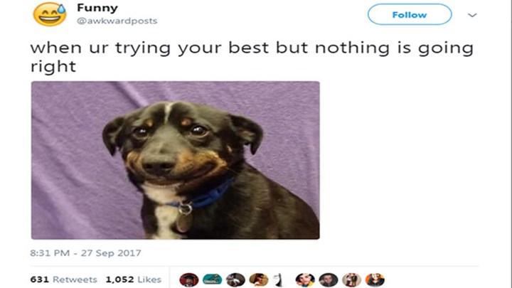 funny animal tweets