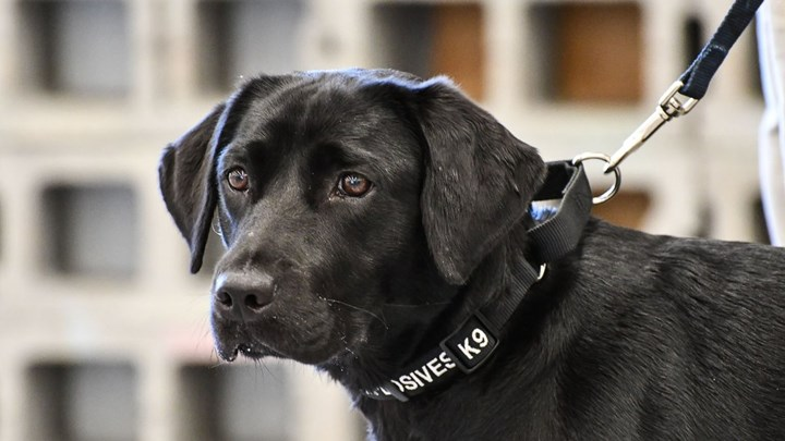 CIA Fires Adorable K9 Because She's Not Interested Sniffing Out Bombs