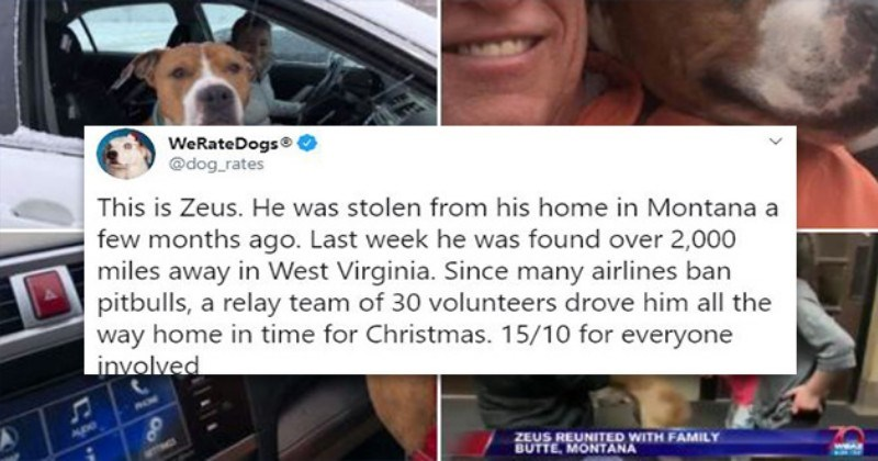 Stolen Pitbull Returned Home In Time For Christmas I Can