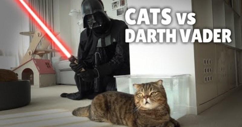 Confused Cats Meet Darth Vader