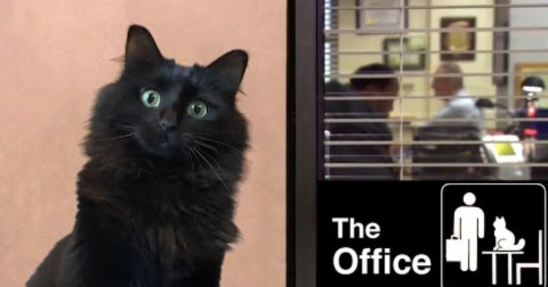 "A Parody Of ""The Office"" Starring a Cat"