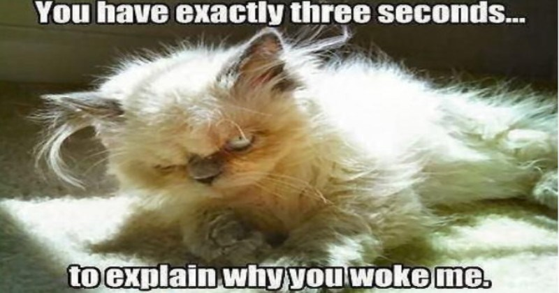 Sleeping Cats Who Are Pissed At Their Owners For Waking Them Up (Memes)