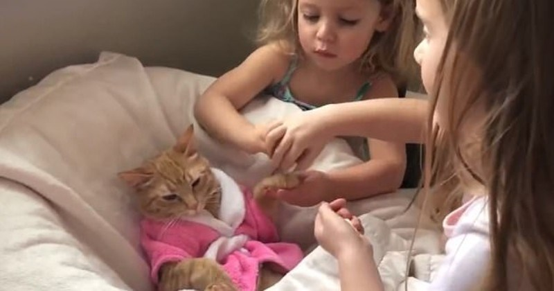 """Cat Spa: Chilled Cat in a Tiny Robe Gets a """"Peti-Cure"""" From Two Preschoolers"""