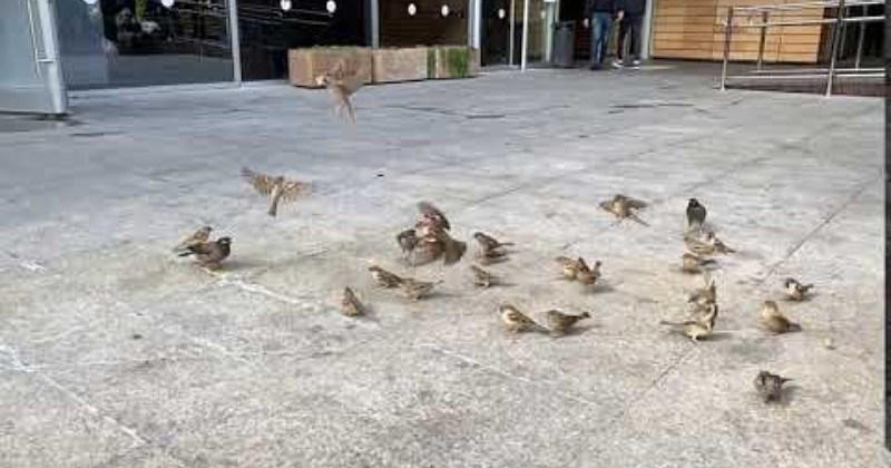 Bird Intercepts Bread Mid-Air