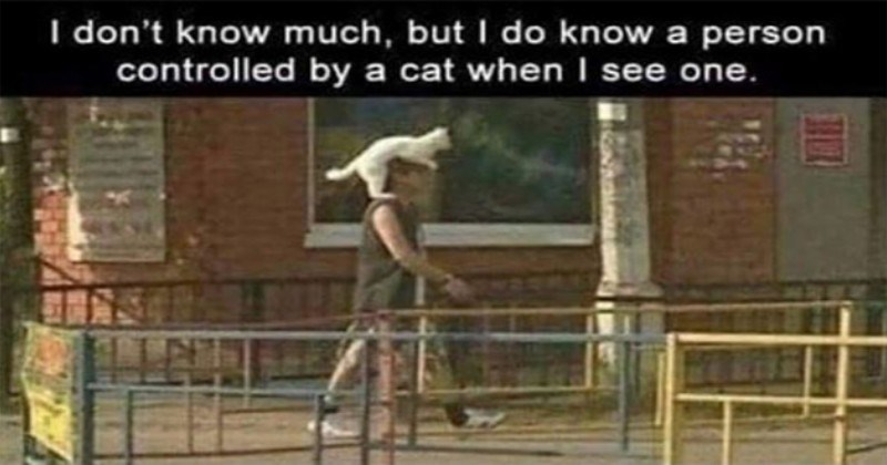 caturday funny cat memes cats lol   don't know much, but do know person controlled by cat see one. pic of a man walking in a street with a white cat sitting on his shoulder watching the road over his head
