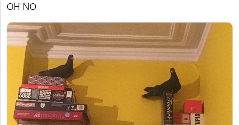 Funny Twitter Thread About The Woman Who Discovered Two Pigeons In Her Living Room