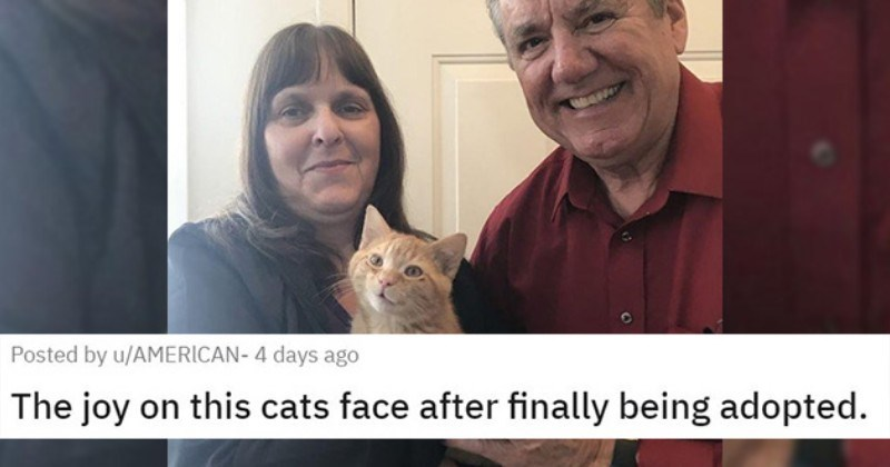 adopt adopted rescue cats dogs animals aww cute shelter | The joy on this cats face after finally being adopted posted by american- happy ginger orange cat smiling while being held by a human couple woman with bangs and a blue shirt and smiling man in a red button up shirt