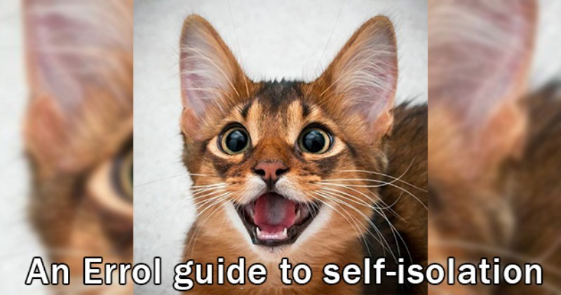 cats guide isolation helpful cute aww animals somail cat | An Errol guide self-isolation cute orange and brown cat with large ears and eyes opening its mouth as if its smiling happily