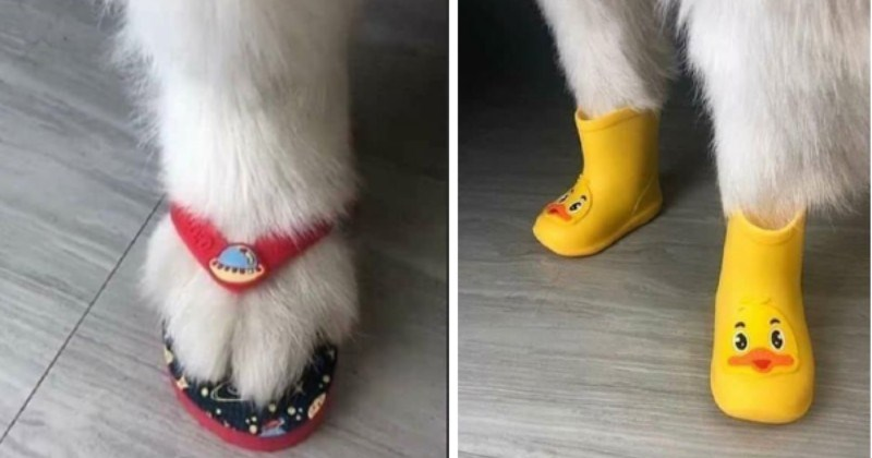 Animals Wearing Shoes Is Exactly What The Doctor Ordered