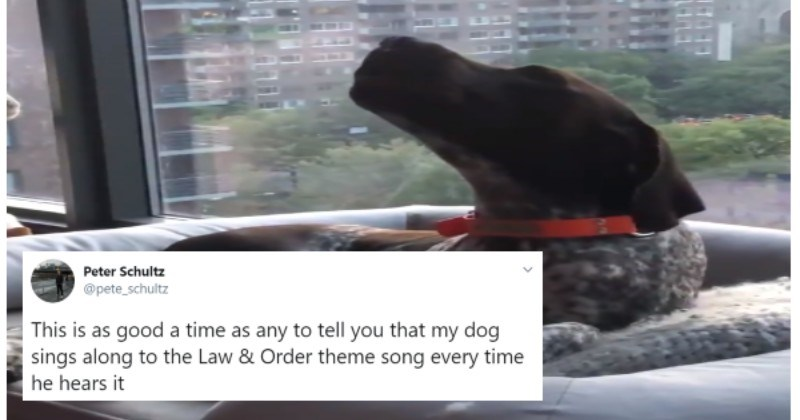 People Discover Their Pups Are Howling Along With The Law & Order Theme Song