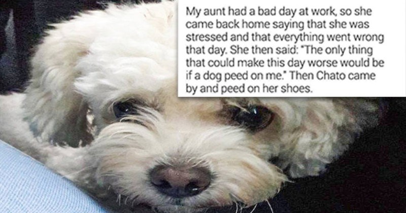 Twitter Users Describe Cute And Funny Pet Stories (21 Tweets)