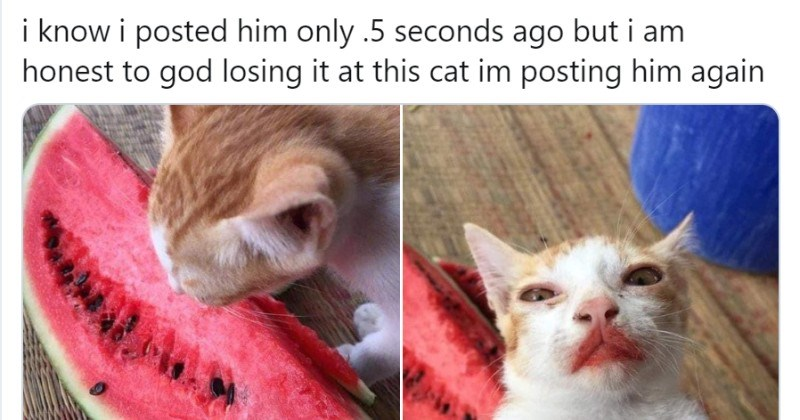 Animal Tweets That Made Us Laugh This Week (May 11, 2020)