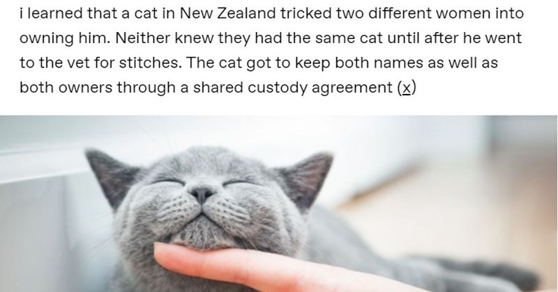 """Intriguing Animal Stories By The """"I Was Today Years Old When"""" Tumblr Page"""