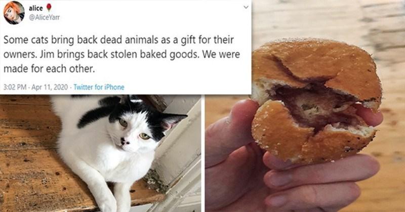 Legendary Cat Brings Owner Stolen Baked Doughnut (Tweets)