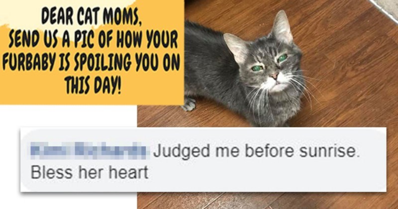 ICHC Users Reveal How Their Cats Spoiled Them For Mother's Day