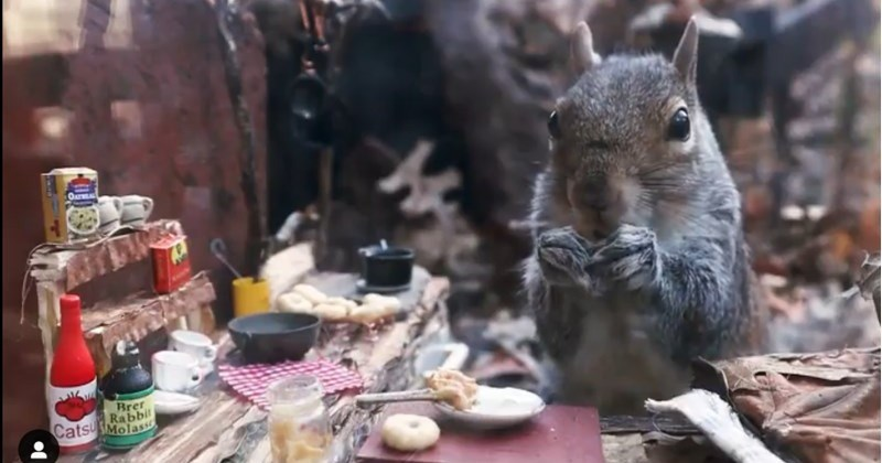 Photographer Takes Slow Motion Vids Of The Squirrels Living In Her Backyard