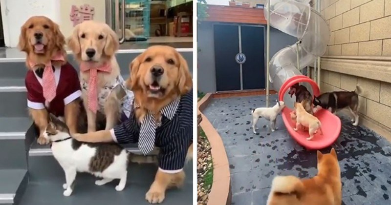 Doggo Gifs For A Wholesome Lift (20 Gifs)