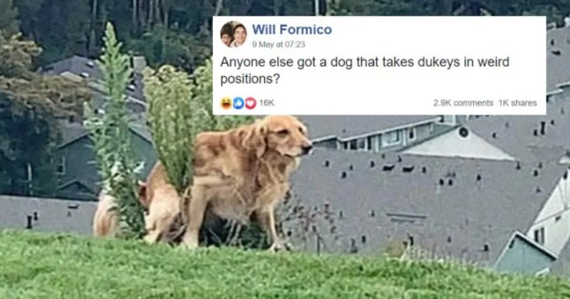 Guy Starts a Funny Thread About Dogs Pooping Weird